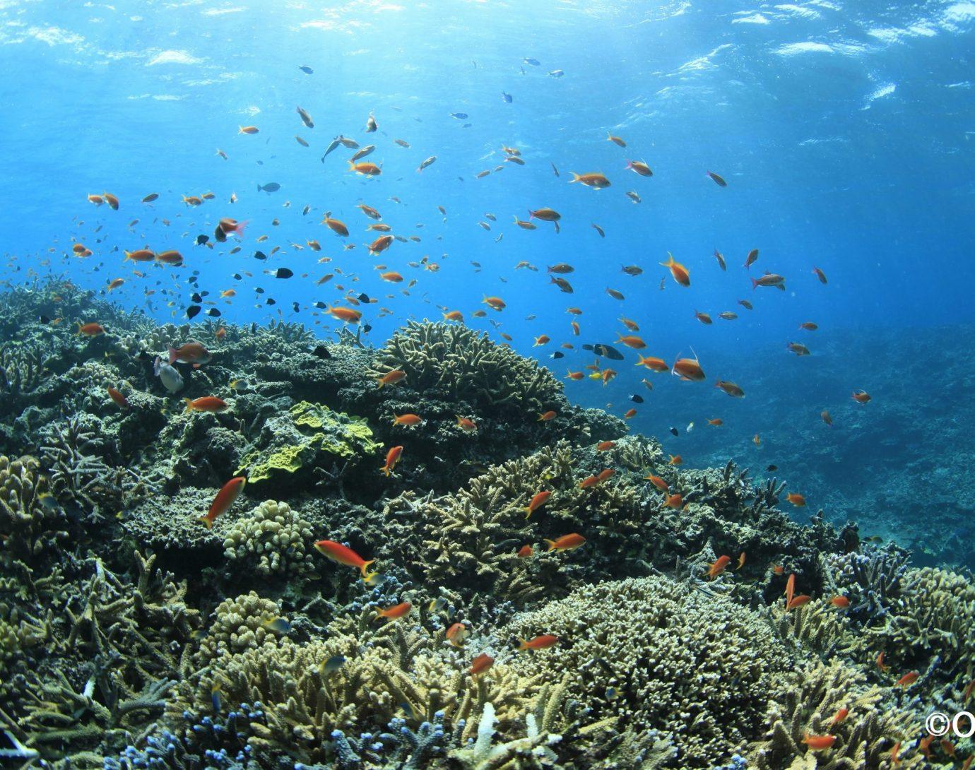 石垣島 海・山・川の絶景、グルメも充実!心地よい南風の中で過ごす石垣島