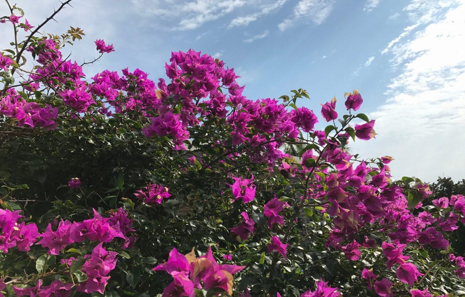 石垣島のフォトギャラリー