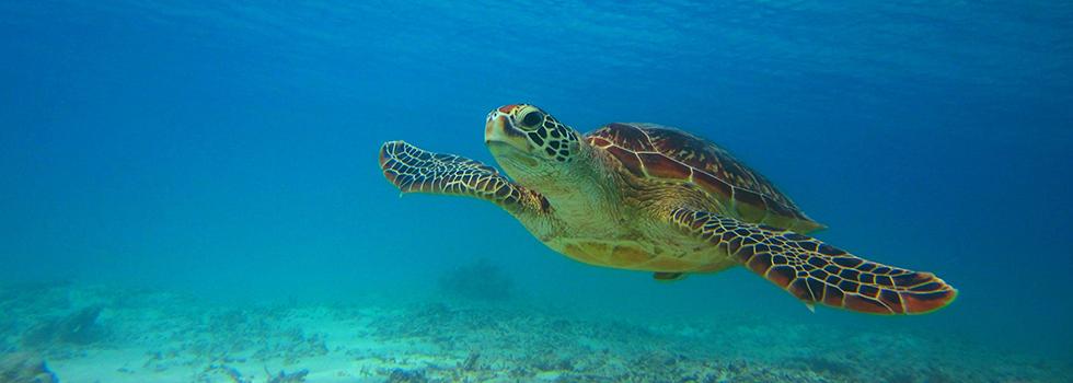 渡嘉敷島 沖縄県でも屈指の人気を誇る「阿波連ビーチ」と「渡嘉志久」の2つのビーチを満喫しましょう!!