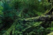 屋久島のフォトギャラリー